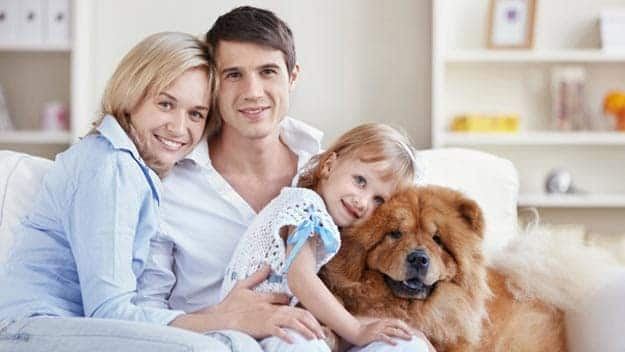 Wills & Trusts dog-young-family Direct Wills Ossett
